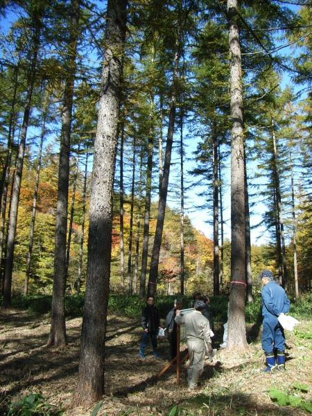カラマツの登録林分